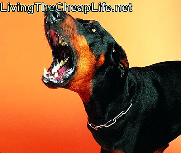 Aggressiv Doberman Pinscher