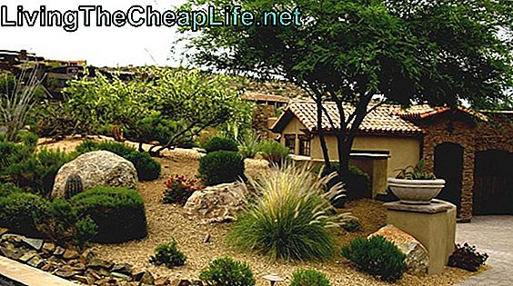 Cheap Desert Landscaping Ideas